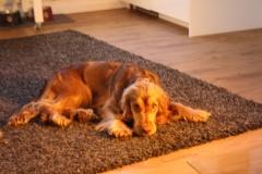 Der Teppich vorm Ofen  :-)
